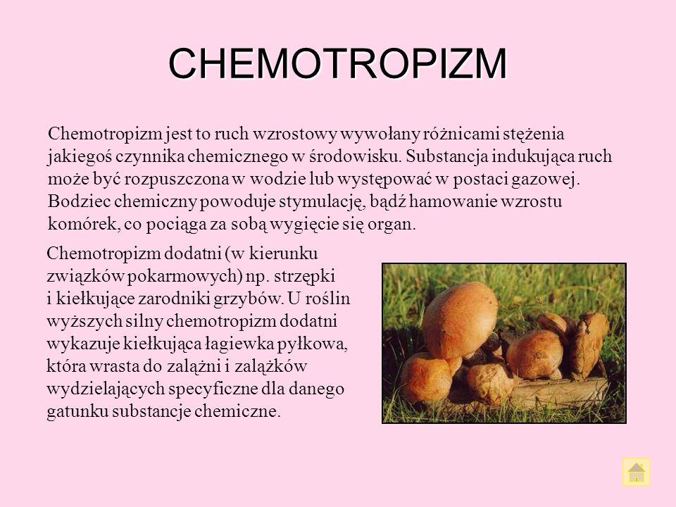CHEMOTROPIZM
