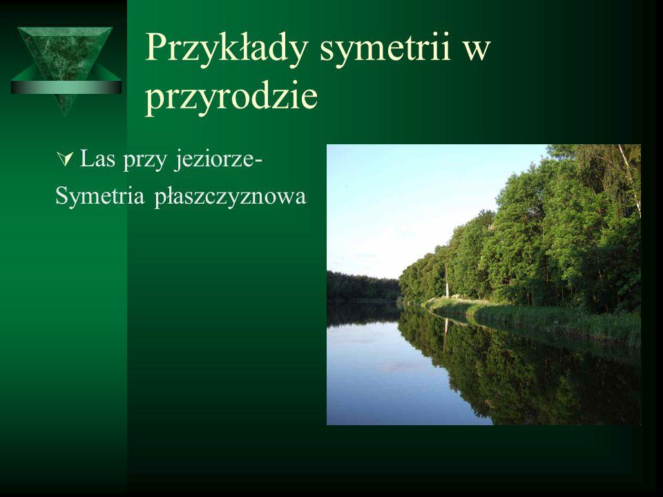 Przykłady symetrii w przyrodzie