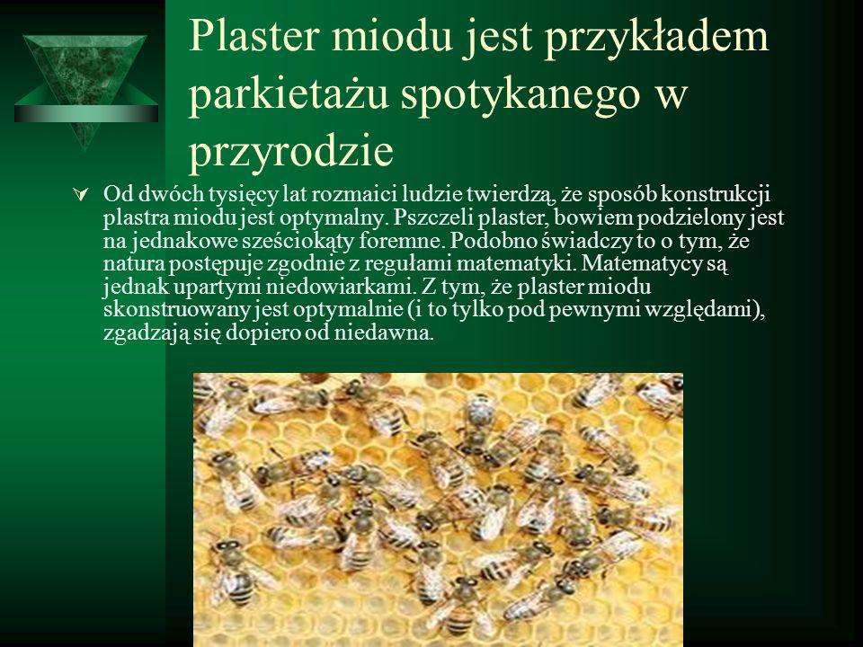 Plaster miodu jest przykładem parkietażu spotykanego w przyrodzie