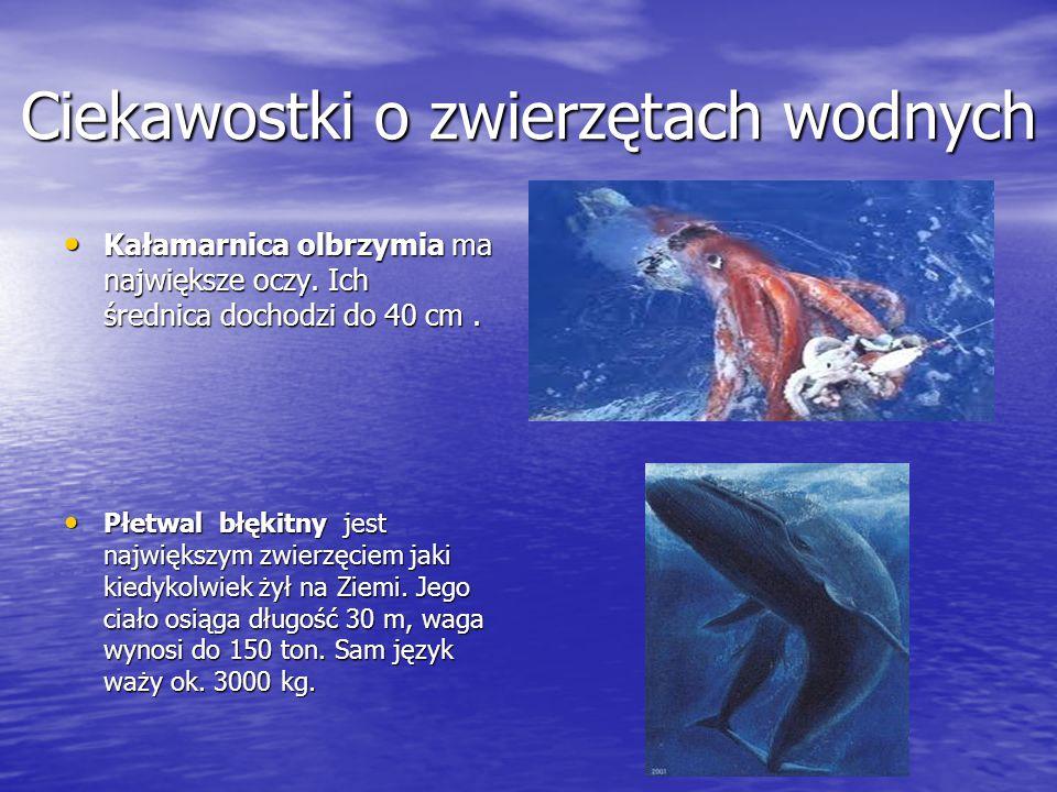 Ciekawostki o zwierzętach wodnych