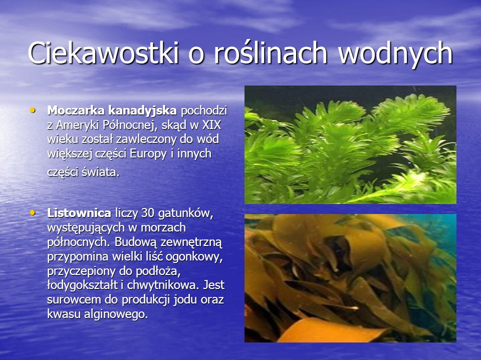 Ciekawostki o roślinach wodnych