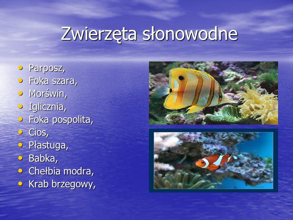 Zwierzęta słonowodne Parposz, Foka szara, Morświn, Iglicznia,