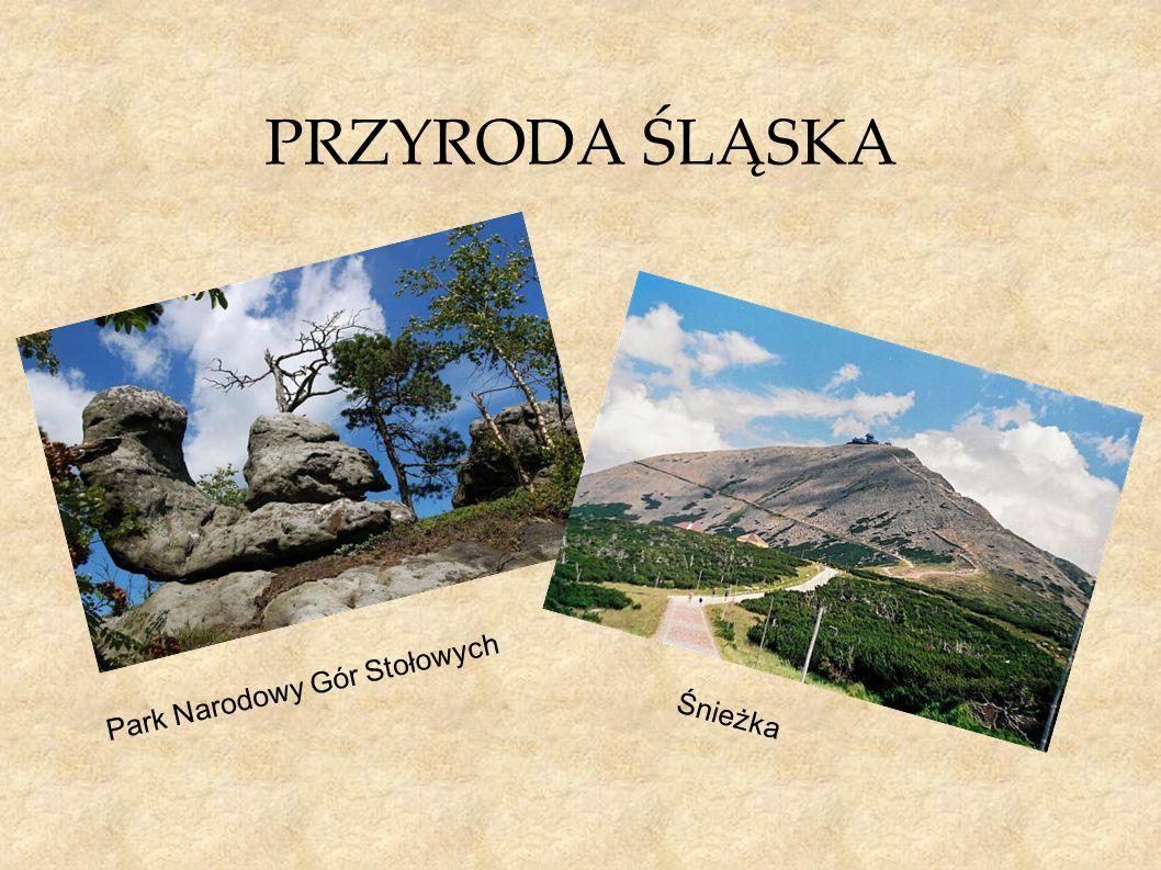 PRZYRODA ŚLĄSKA Park Narodowy Gór Stołowych Śnieżka