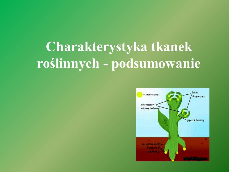Charakterystyka tkanek roślinnych - podsumowanie