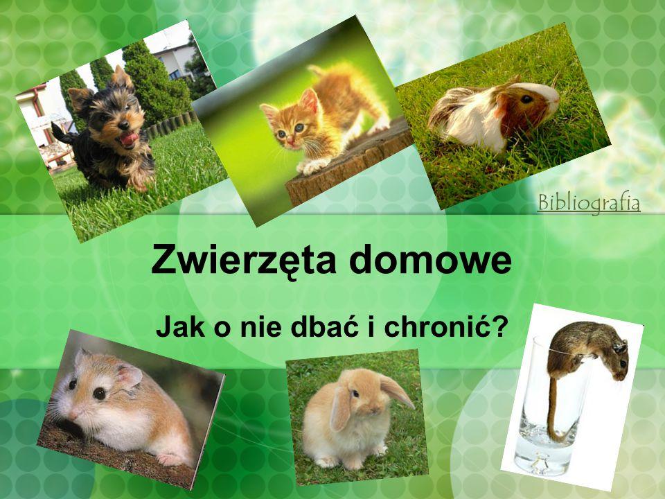 Bibliografia Zwierzęta domowe Jak o nie dbać i chronić