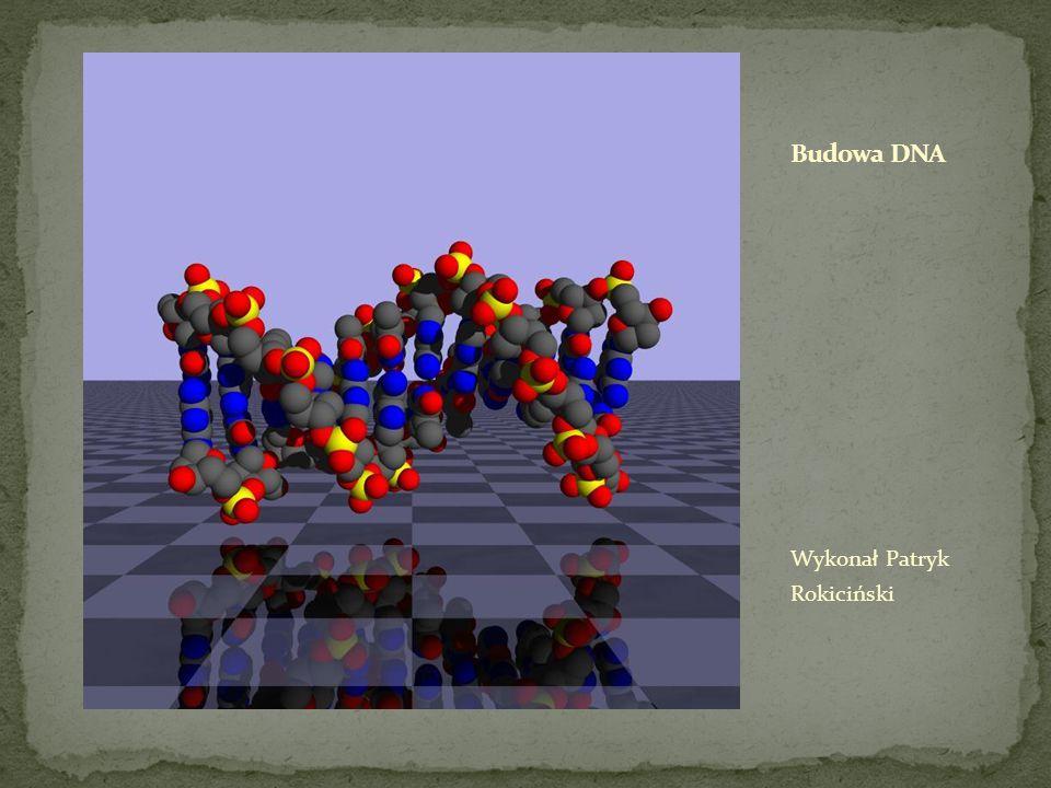 Budowa DNA Wykonał Patryk Rokiciński