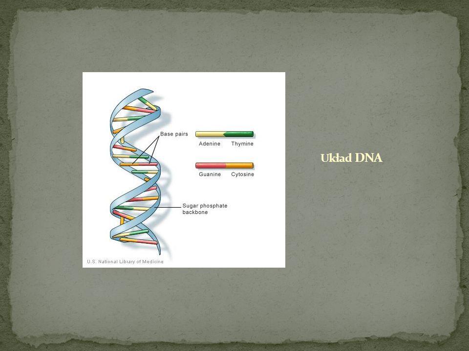 Układ DNA