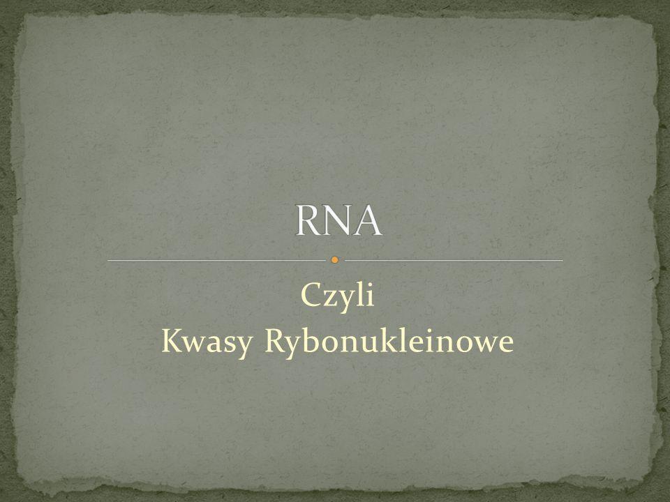 Czyli Kwasy Rybonukleinowe