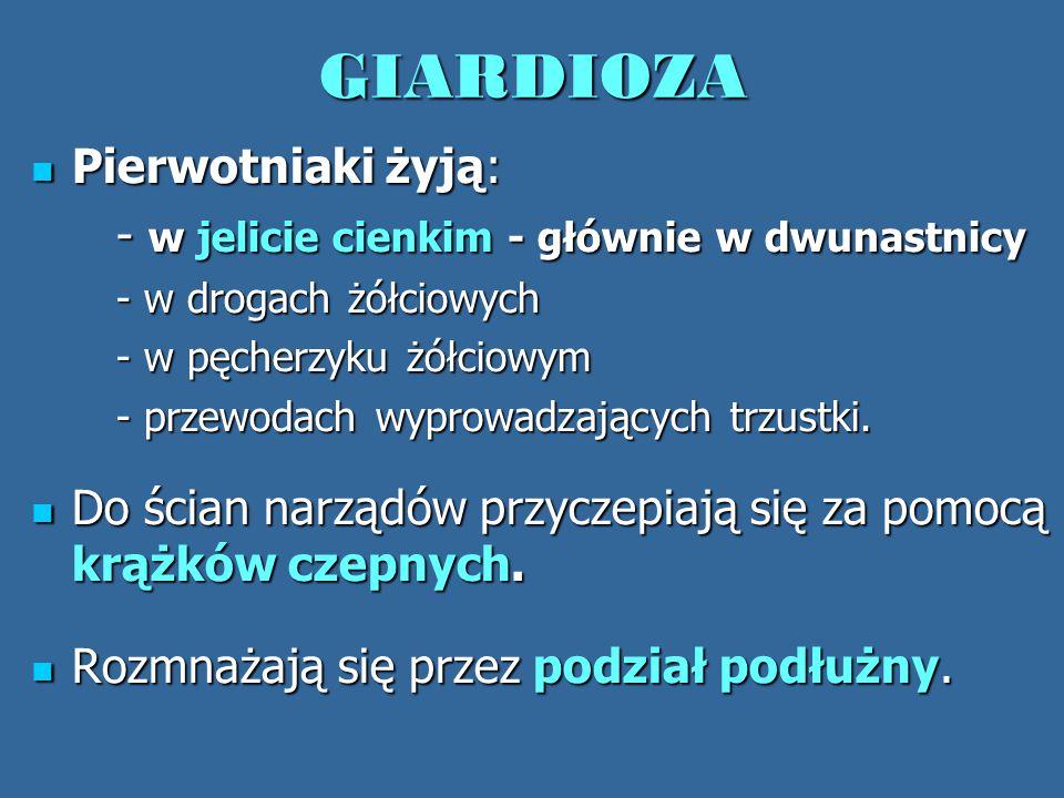 GIARDIOZA Pierwotniaki żyją: