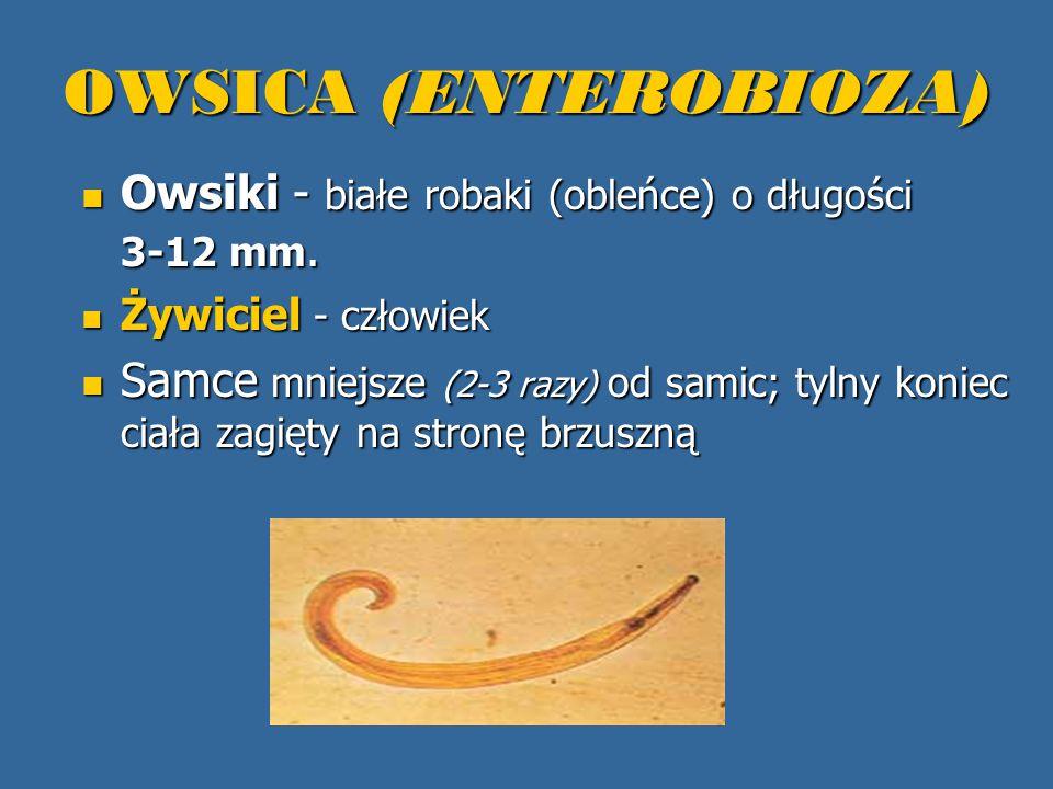 OWSICA (ENTEROBIOZA) Owsiki - białe robaki (obleńce) o długości 3-12 mm. Żywiciel - człowiek.