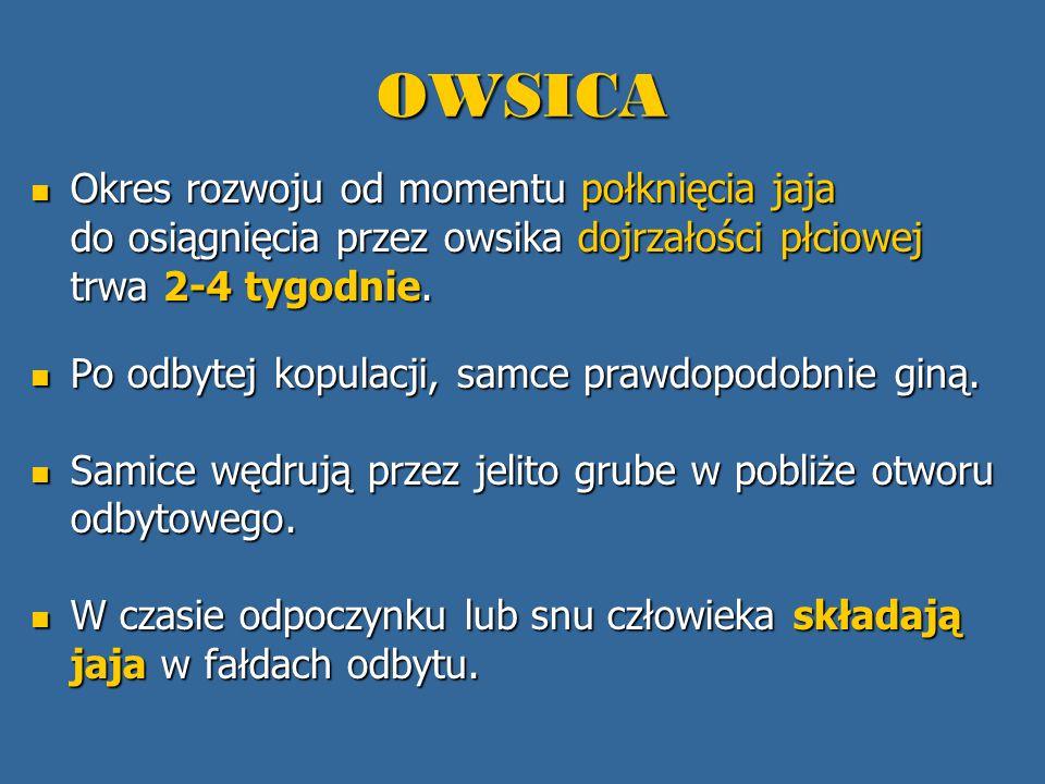 OWSICA Okres rozwoju od momentu połknięcia jaja do osiągnięcia przez owsika dojrzałości płciowej trwa 2-4 tygodnie.