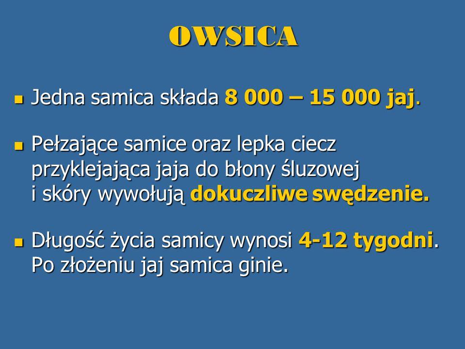 OWSICA Jedna samica składa 8 000 – 15 000 jaj.