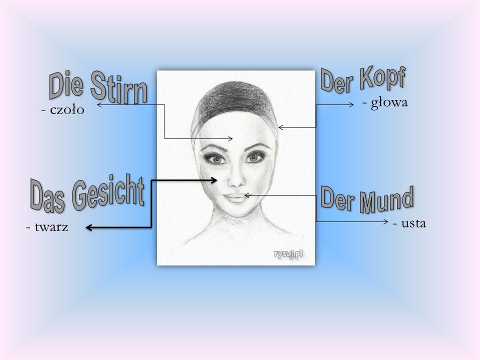 Der Kopf Die Stirn - głowa - czoło Das Gesicht Der Mund - usta - twarz