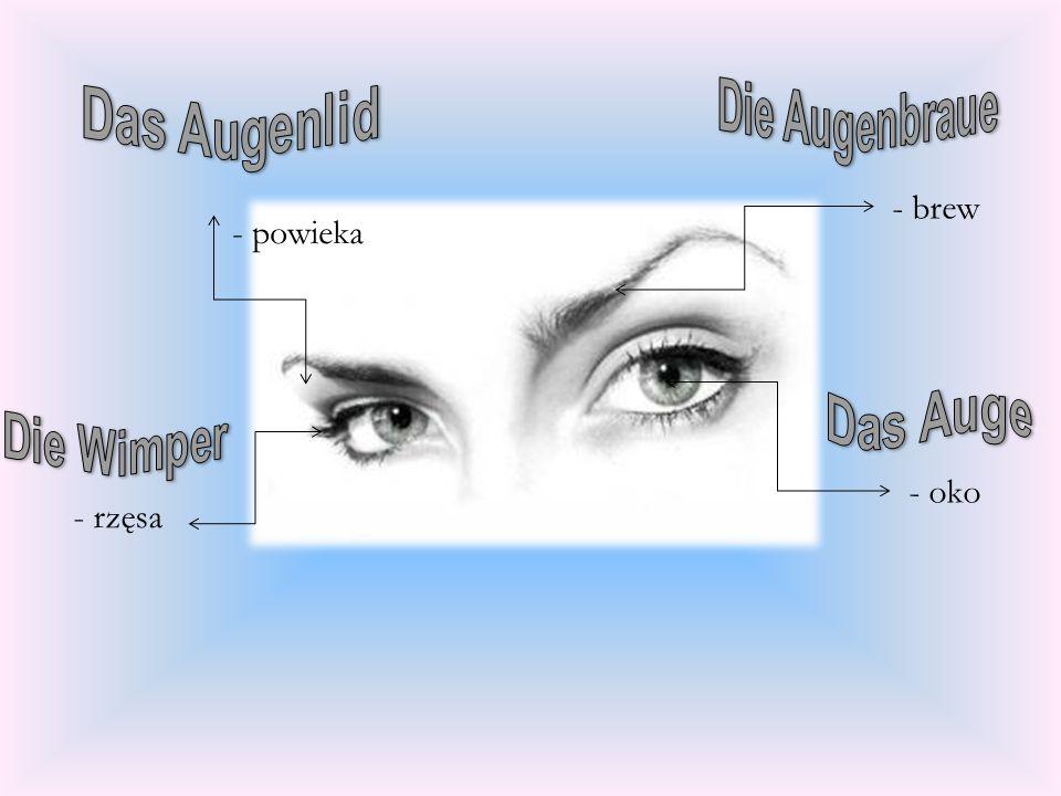 Das Augenlid - brew - powieka - oko - rzęsa Die Augenbraue Das Auge
