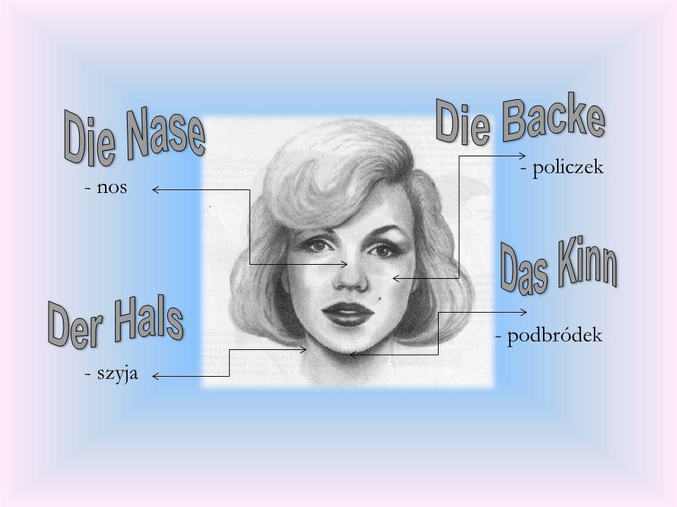- policzek - nos - podbródek - szyja Die Backe Die Nase Das Kinn