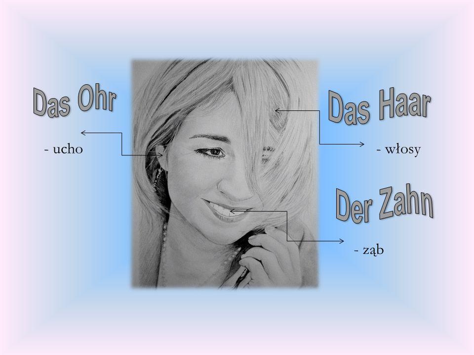 Das Ohr Das Haar - ucho - włosy Der Zahn - ząb