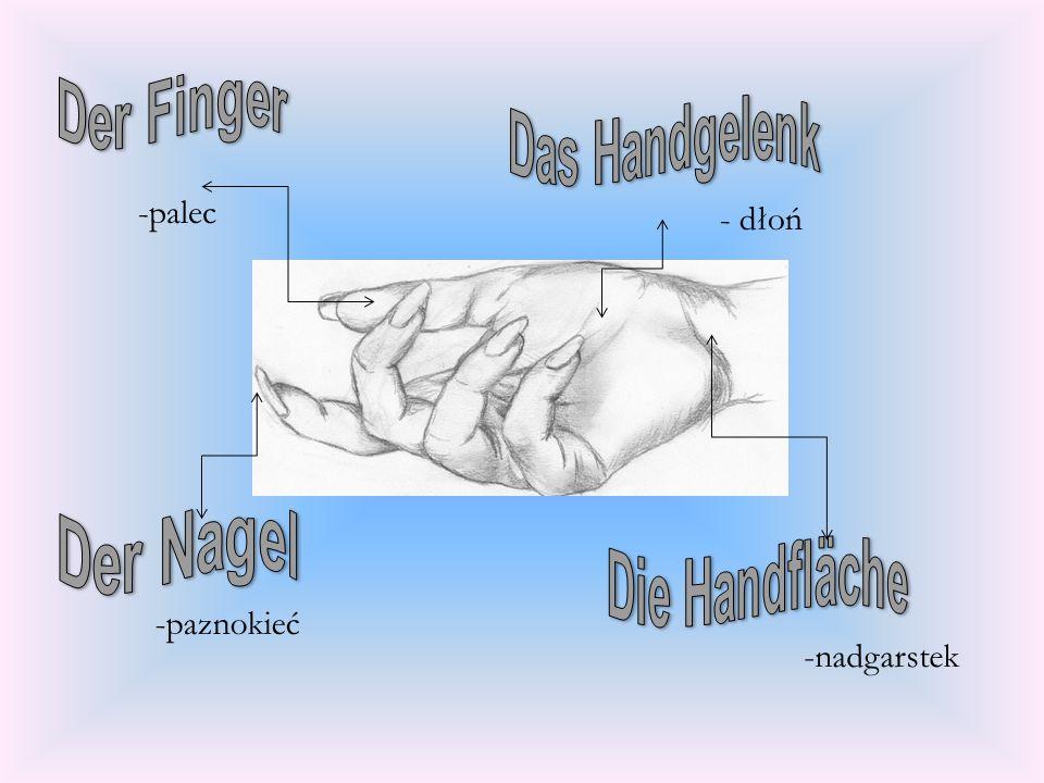 -palec - dłoń -paznokieć -nadgarstek Der Finger Das Handgelenk