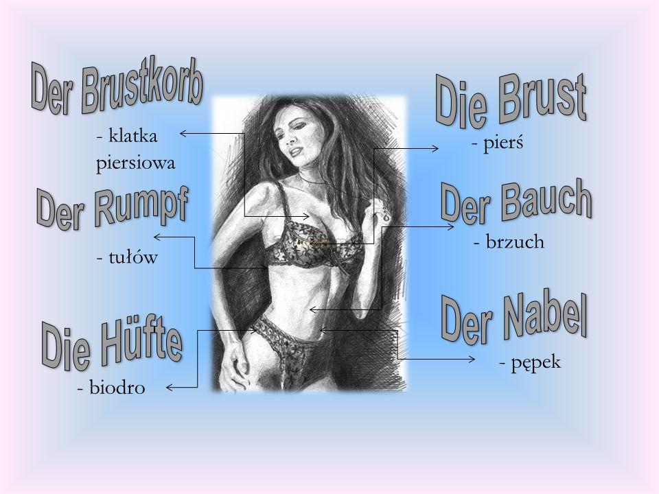 - klatka piersiowa - pierś - brzuch - tułów - pępek - biodro