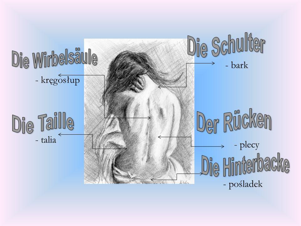 - bark - kręgosłup - talia - plecy - pośladek Die Schulter