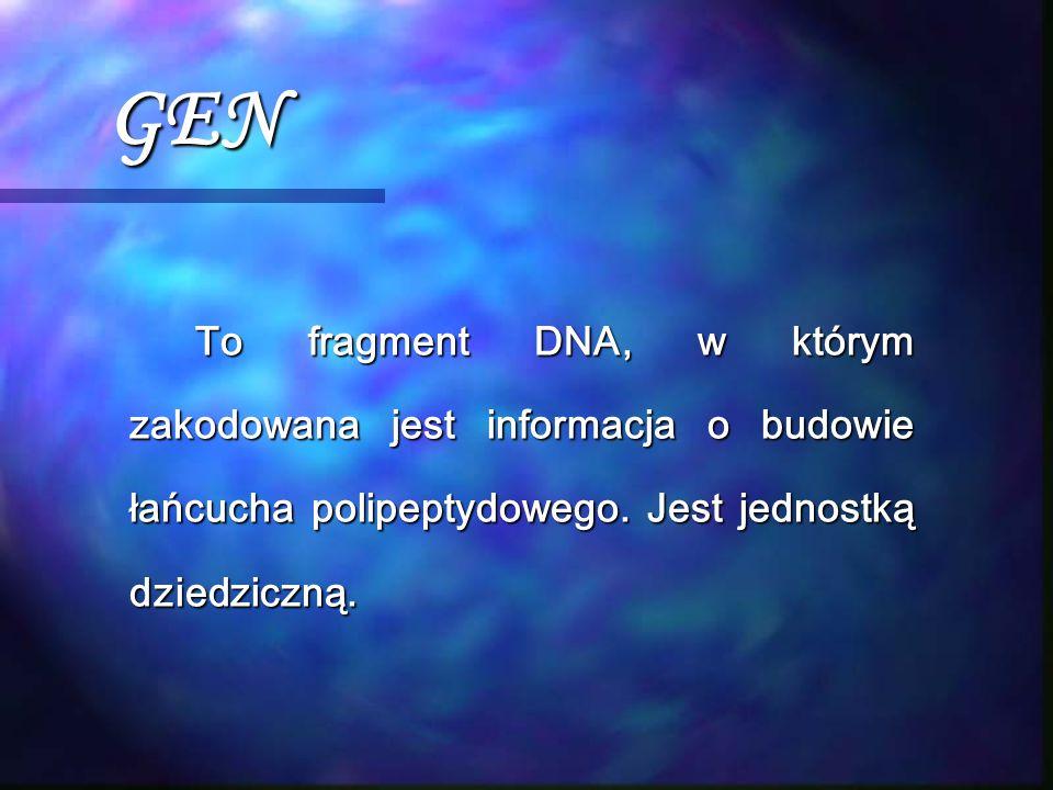 GEN To fragment DNA, w którym zakodowana jest informacja o budowie łańcucha polipeptydowego.