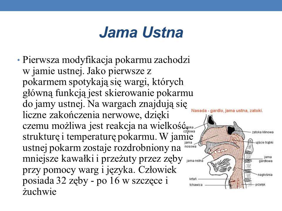 Jama Ustna
