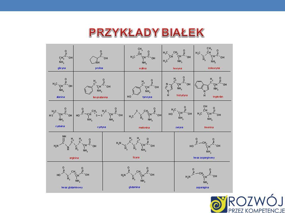 Przykłady Białek