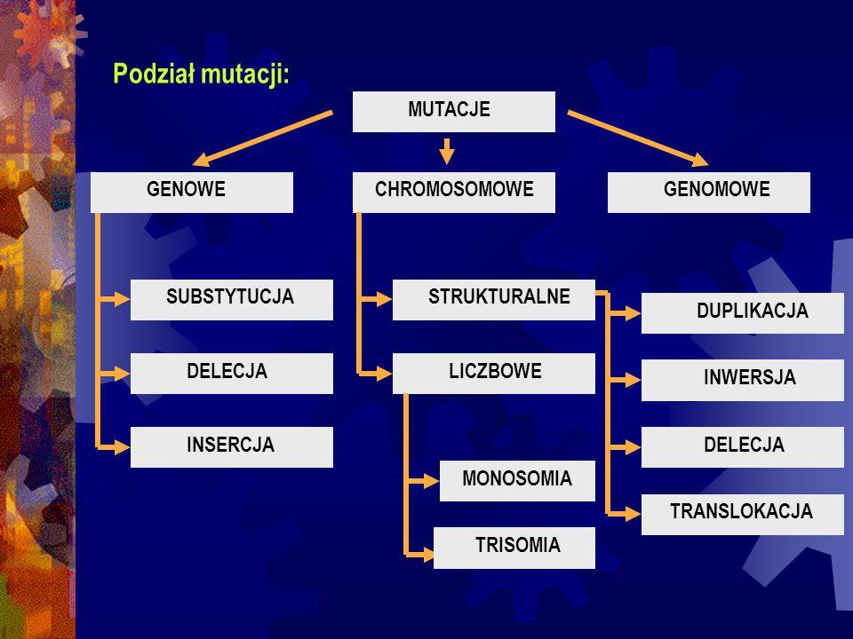 Podział mutacji: MUTACJE GENOWE CHROMOSOMOWE GENOMOWE SUBSTYTUCJA
