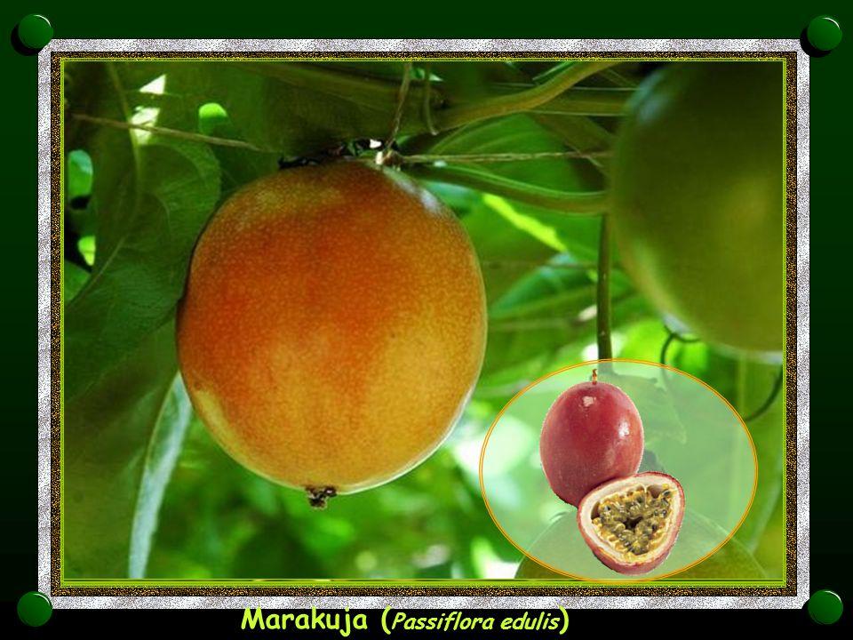 Marakuja (Passiflora edulis)