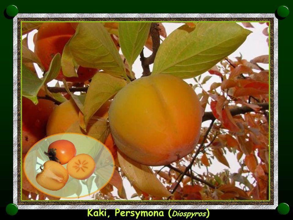 Kaki, Persymona (Diospyros)