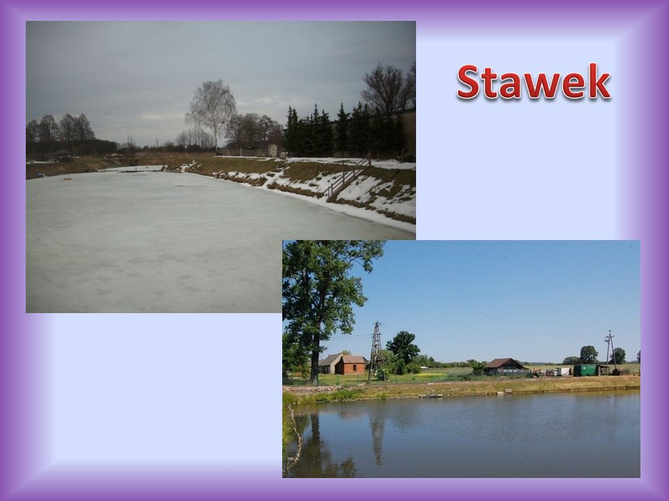 Stawek