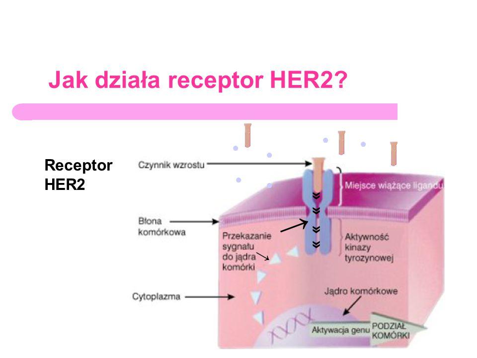Jak działa receptor HER2