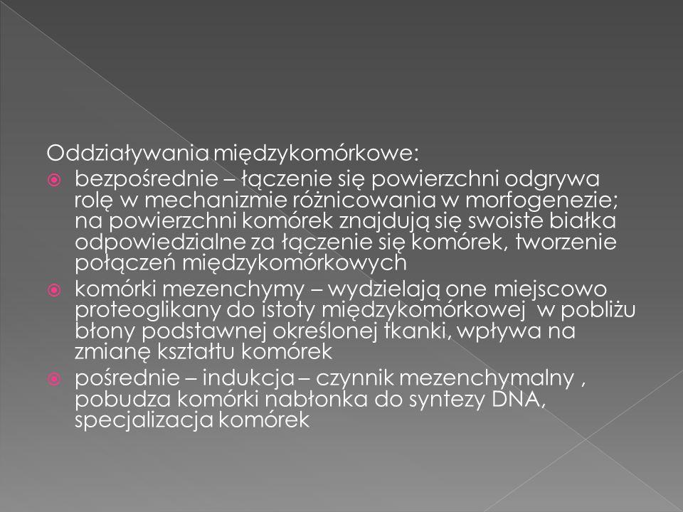 Oddziaływania międzykomórkowe: