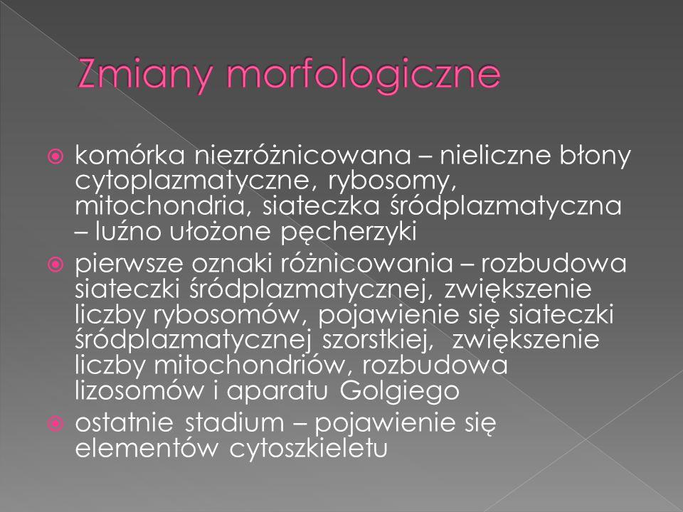 Zmiany morfologiczne