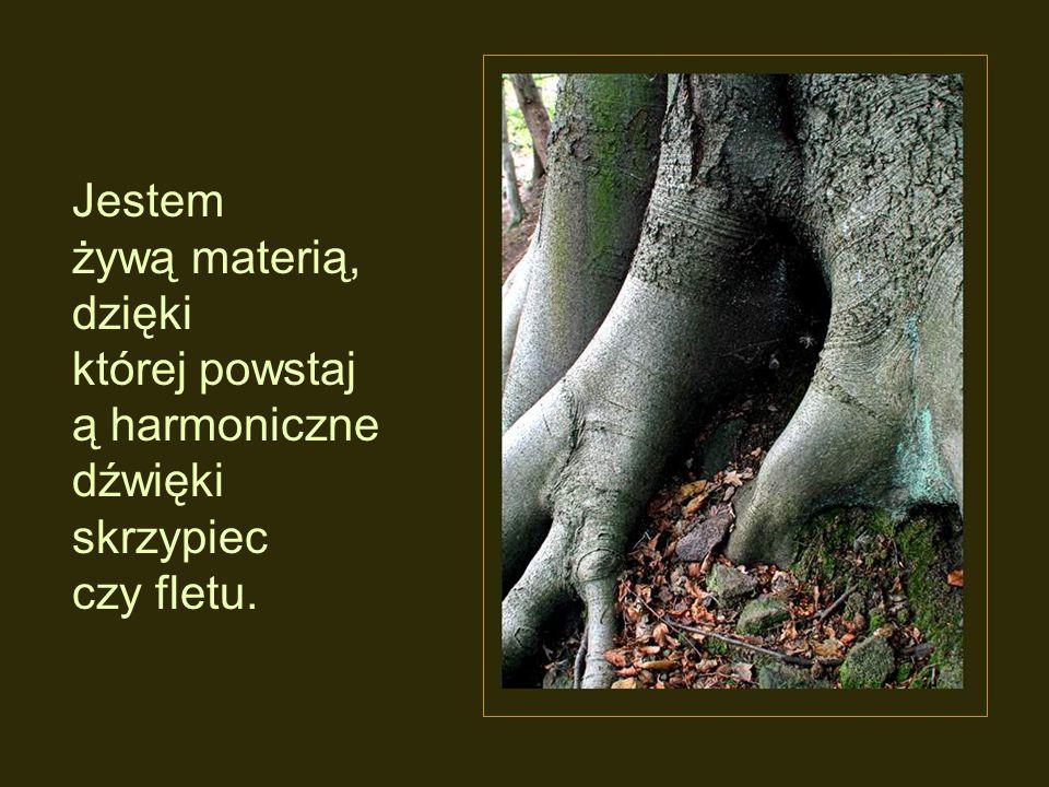 Jestem żywą materią, dzięki której powstają harmoniczne dźwięki skrzypiec czy fletu.
