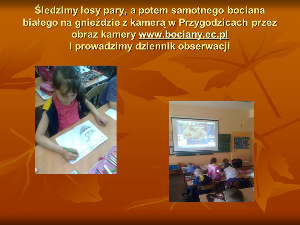 Śledzimy losy pary, a potem samotnego bociana białego na gnieździe z kamerą w Przygodzicach przez obraz kamery www.bociany.ec.pl i prowadzimy dziennik obserwacji
