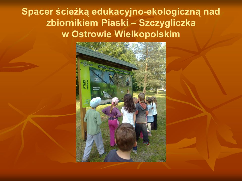 Spacer ścieżką edukacyjno-ekologiczną nad zbiornikiem Piaski – Szczygliczka w Ostrowie Wielkopolskim