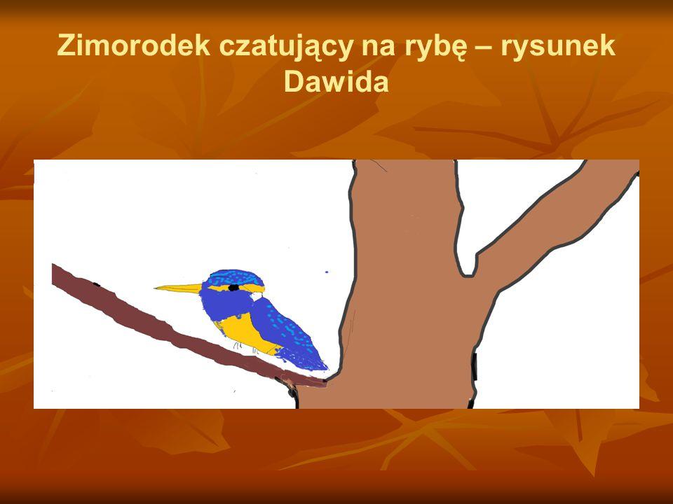 Zimorodek czatujący na rybę – rysunek Dawida