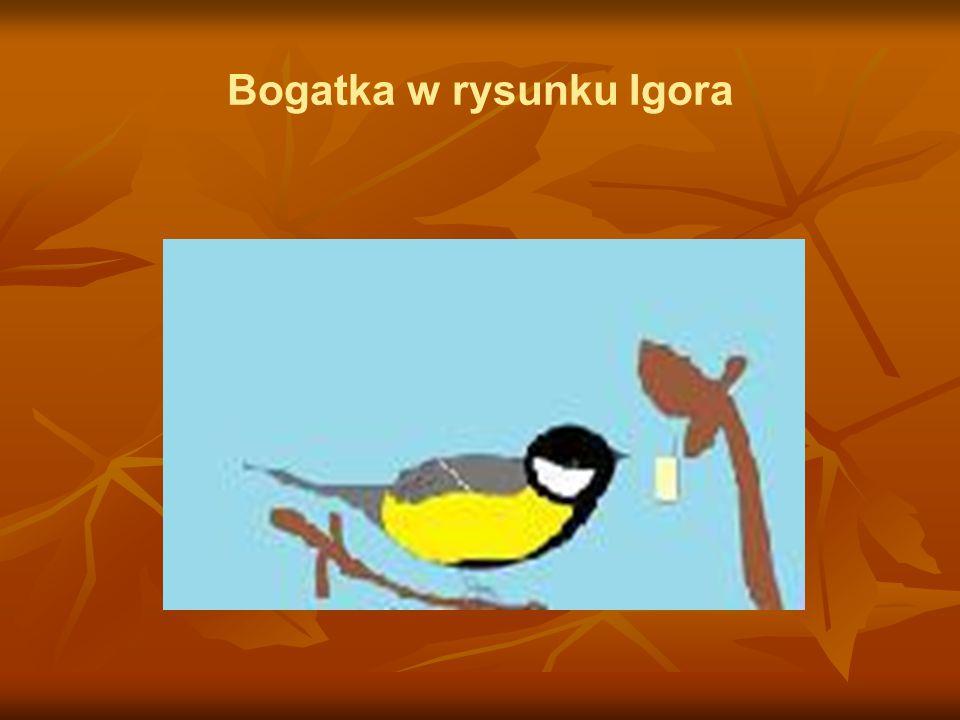 Bogatka w rysunku Igora
