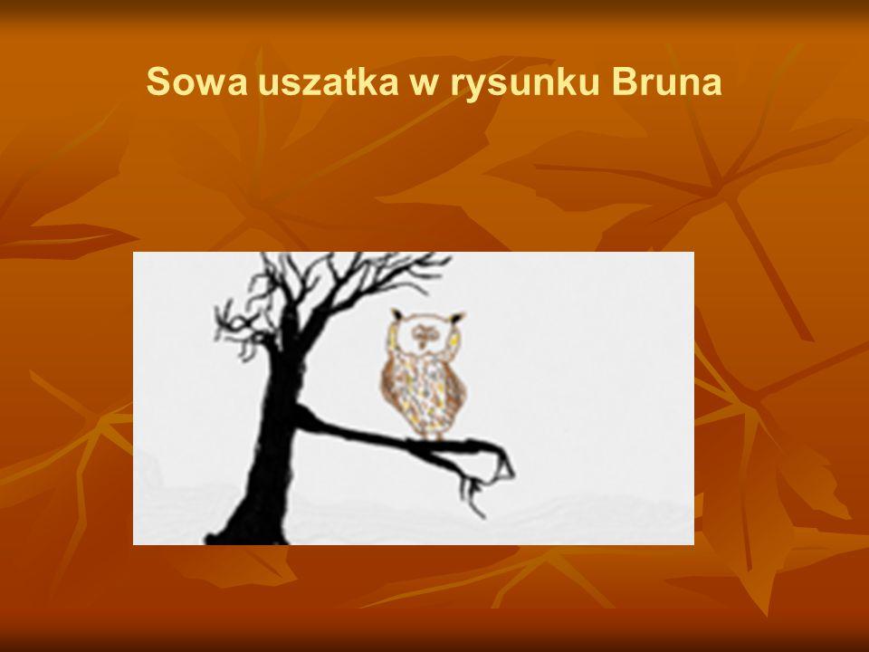 Sowa uszatka w rysunku Bruna