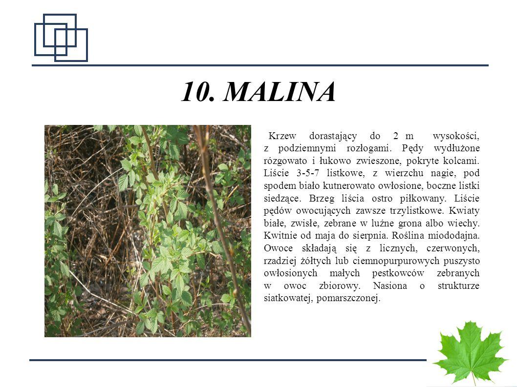 10. MALINA