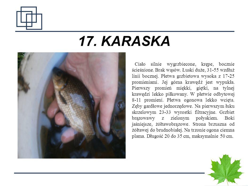 17. KARASKA