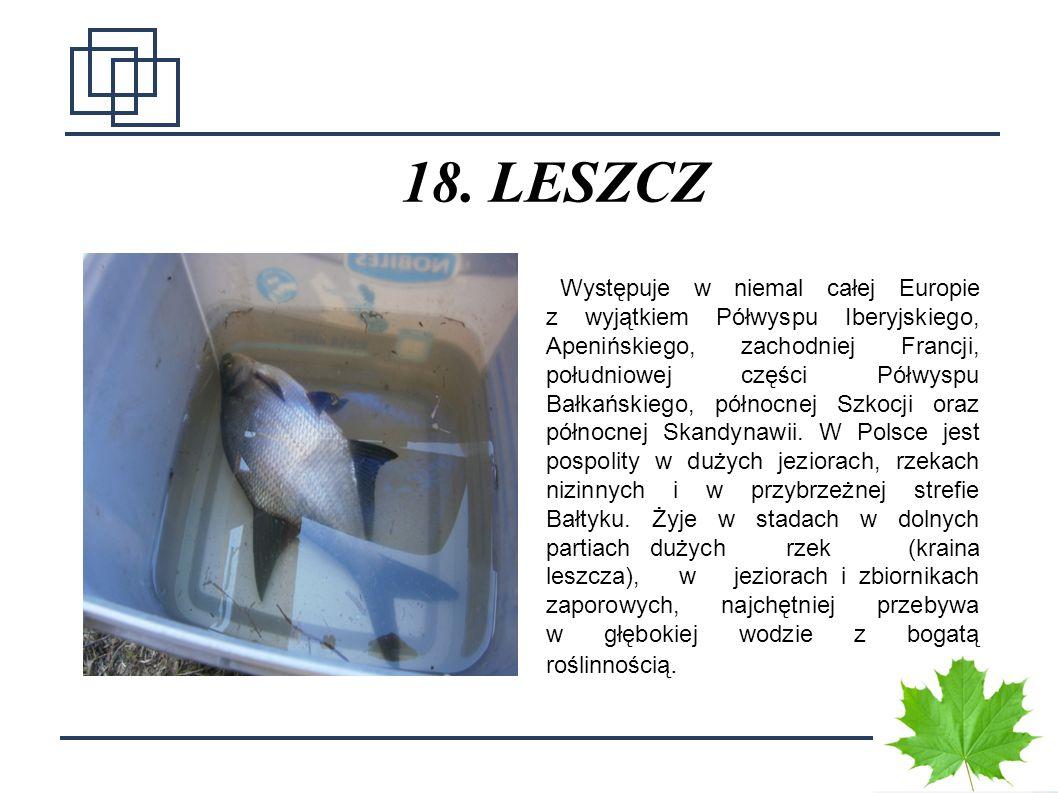 18. LESZCZ