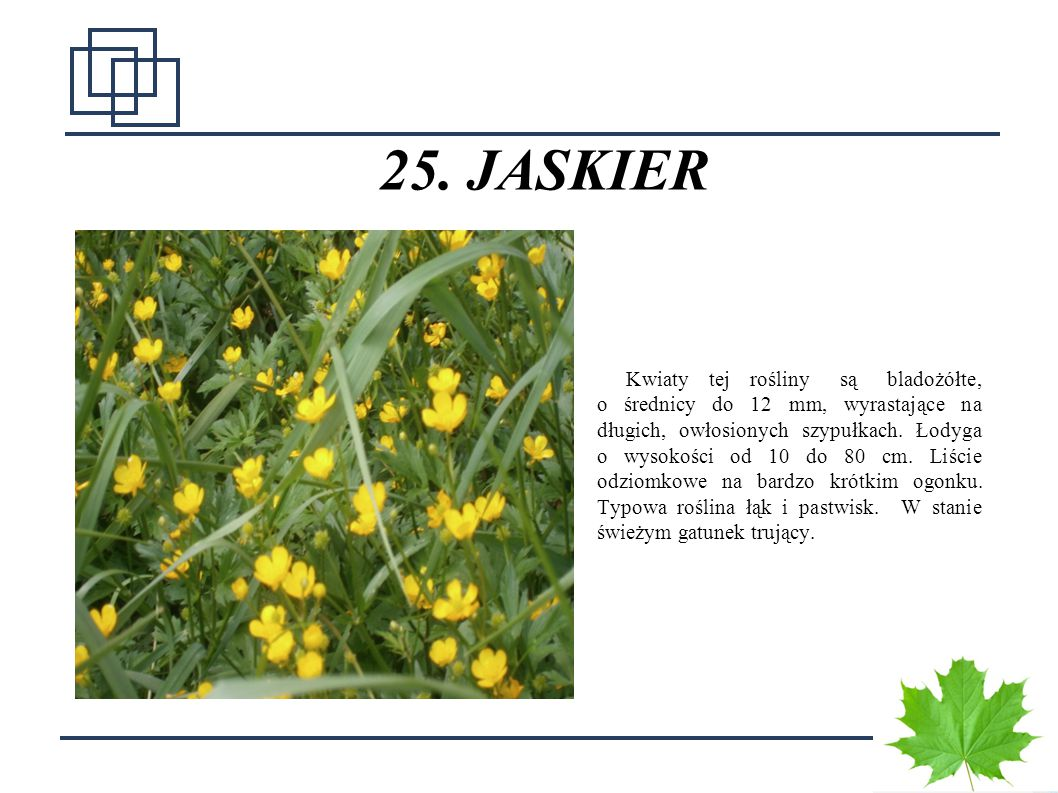 25. JASKIER