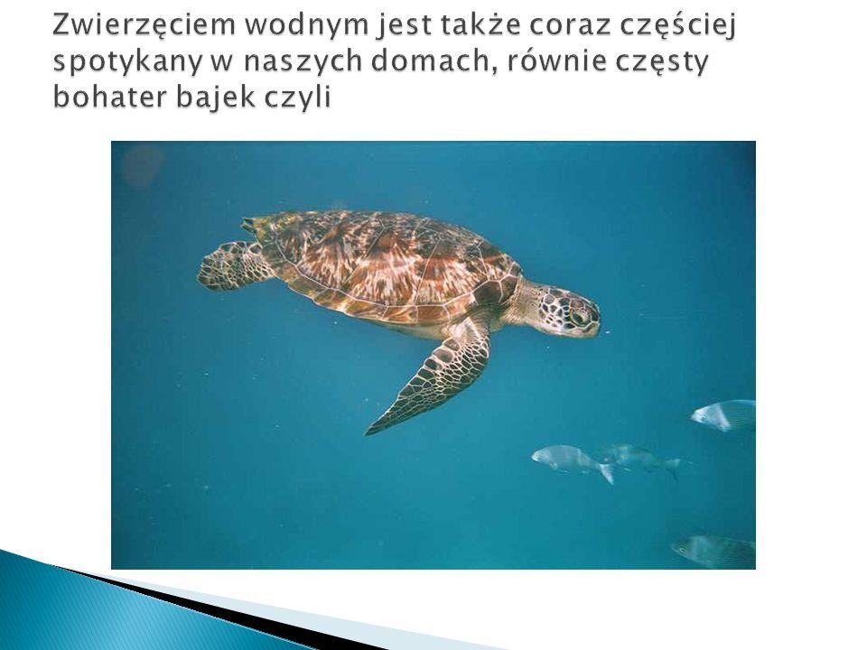 Zwierzęciem wodnym jest także coraz częściej spotykany w naszych domach, równie częsty bohater bajek czyli