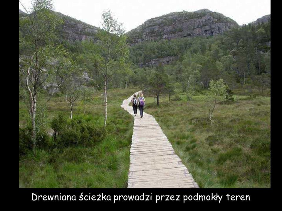 Drewniana ścieżka prowadzi przez podmokły teren