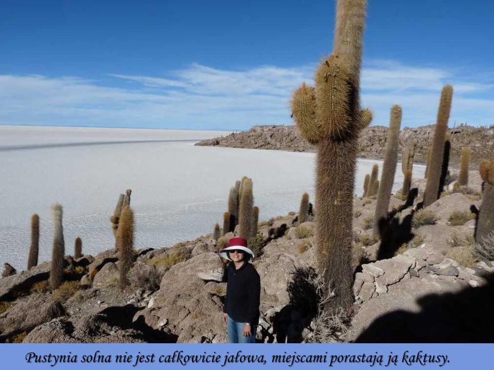 Pustynia solna nie jest całkowicie jałowa, miejscami porastają ją kaktusy.