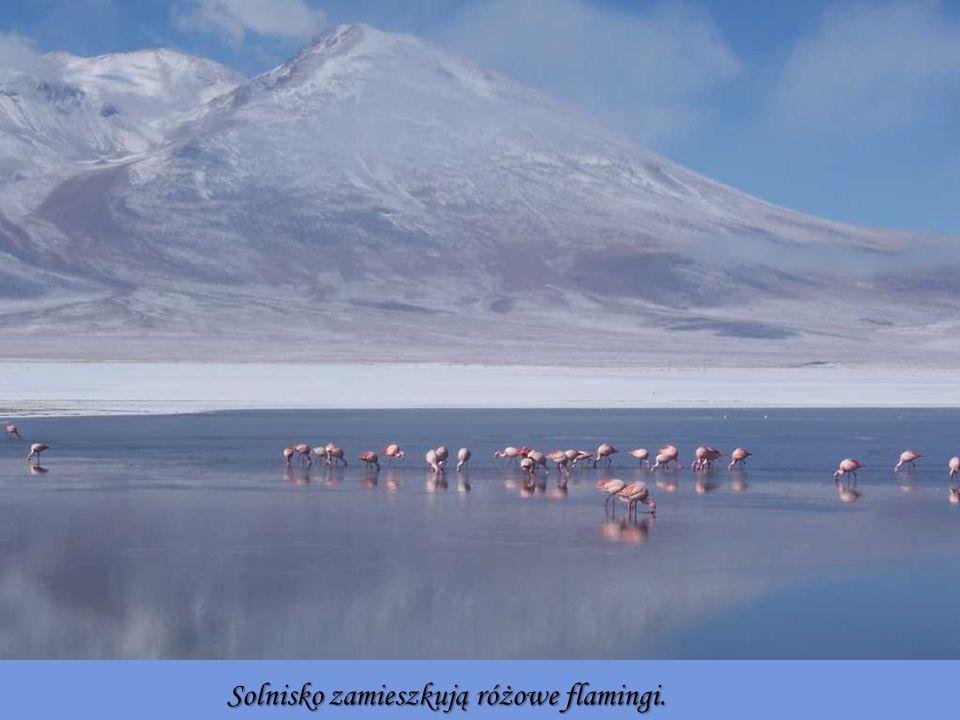 Solnisko zamieszkują różowe flamingi.