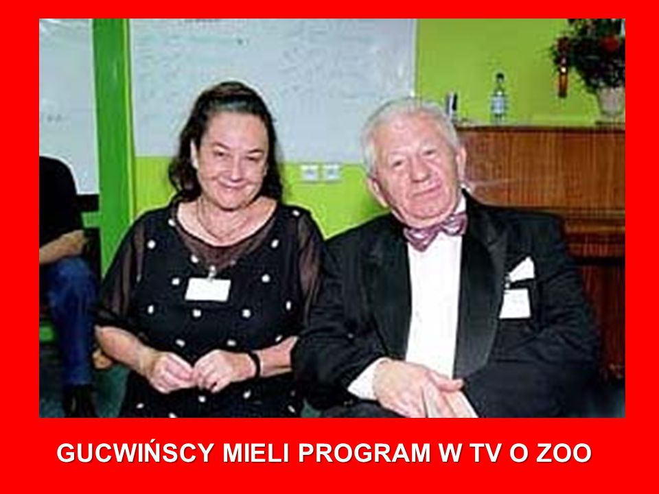 GUCWIŃSCY MIELI PROGRAM W TV O ZOO