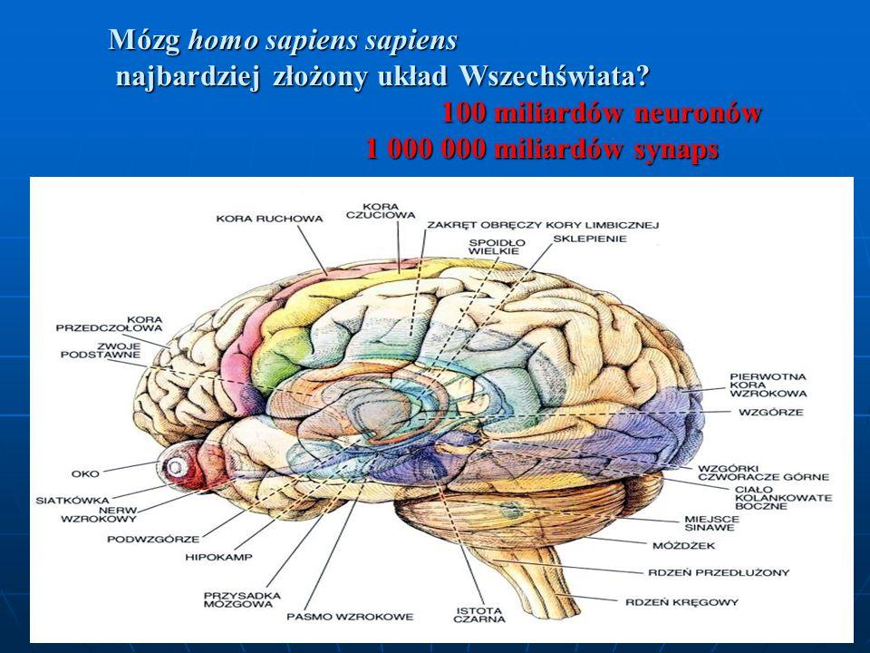 Mózg homo sapiens sapiens najbardziej złożony układ Wszechświata