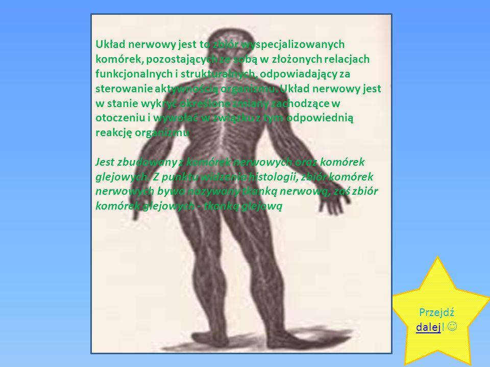 Układ nerwowy jest to zbiór wyspecjalizowanych komórek, pozostających ze sobą w złożonych relacjach funkcjonalnych i strukturalnych, odpowiadający za sterowanie aktywnością organizmu. Układ nerwowy jest w stanie wykryć określone zmiany zachodzące w otoczeniu i wywołać w związku z tym odpowiednią reakcję organizmu Jest zbudowany z komórek nerwowych oraz komórek glejowych. Z punktu widzenia histologii, zbiór komórek nerwowych bywa nazywany tkanką nerwową, zaś zbiór komórek glejowych - tkanką glejową